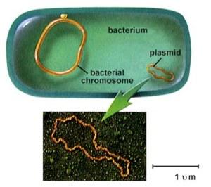 plasmids BioVector NTCC Inc.